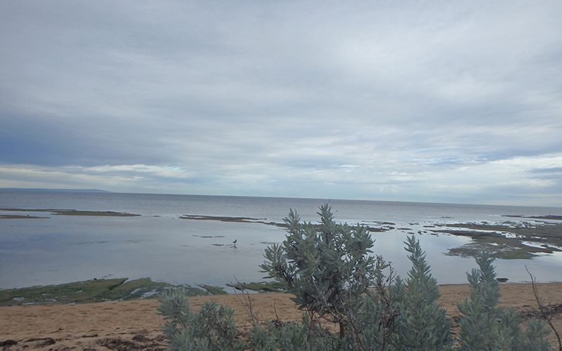 Mud flats at Port Phillip Bay